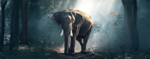 Animal totem Eléphant